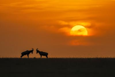 At The Sunset by Jun Zuo