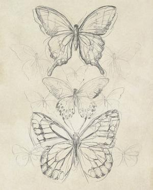 Vintage Butterfly Sketch II by June Erica Vess
