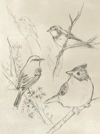 Vintage Songbird Sketch I