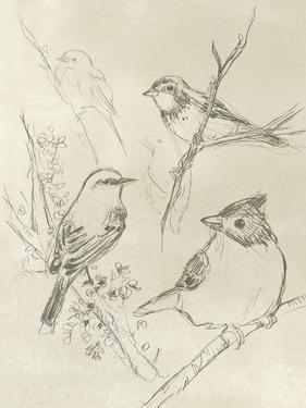 Vintage Songbird Sketch I by June Erica Vess