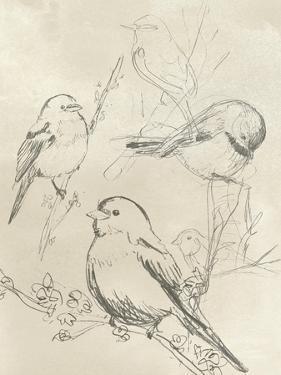 Vintage Songbird Sketch II by June Erica Vess