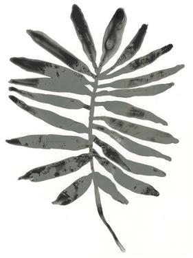 Foliage Fossil VII by June Vess