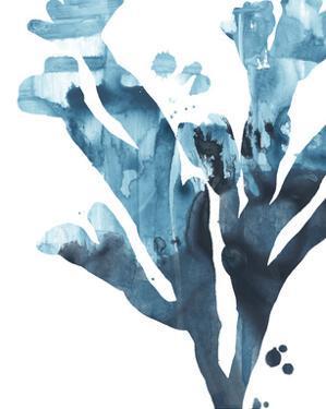 Inkwash Kelp II by June Vess