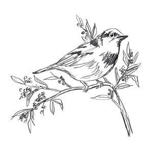 Simple Songbird Sketches I by June Vess