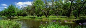 Jungle Gardens, Avery Island, Southern, Louisiana, USA