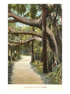 Jungle, Palm Beach, Florida