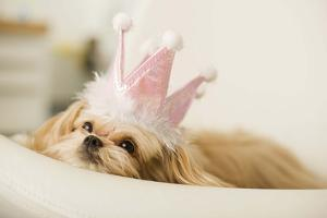 Dog with a Crown by Jupiterimages