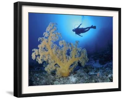 Diver and Soft Coral, Great Barrier Reef, Queensland, Australia
