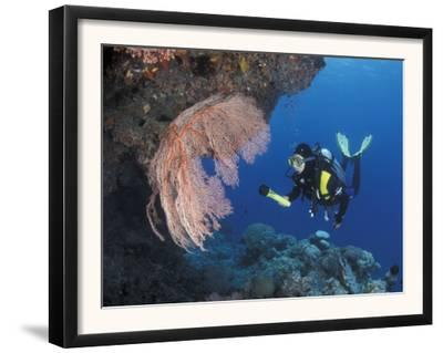 Diver Examines Coral Reef, Great Barrier Reef, Australia