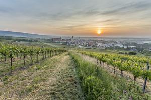 Sunrise, Clouds, Town, Vineyard, the Horizon by Jurgen Ulmer