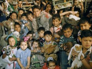 Children Crowd Together with their Pets for a Blessing of the Animals by Justin Locke
