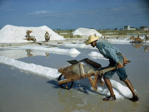 Man Pushes a Wheelbarrow of Salt Evaporated from Sea Water by Justin Locke