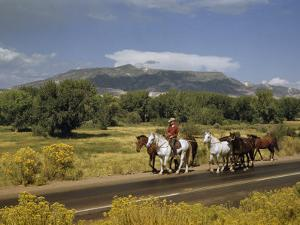 Rancher Leads His Horses on Country Road, Mountains Line Horizon by Justin Locke