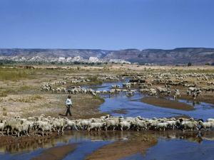 Shepherd Walks Amid Large Flock of Sheep Standing in and around River by Justin Locke