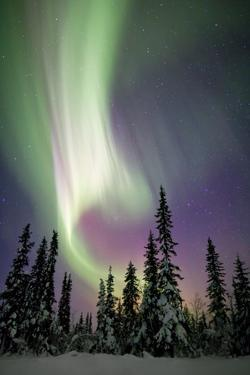 Aurora Borealis and Snow Covered Trees by Justin Reznick Photography