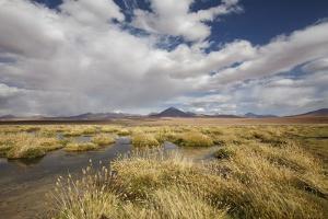 Chile, Pampas Incahuasi, Ischu Grass, Lagoon by Jutta Ulmer