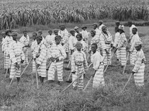 Juvenile Southern Chain Gang Convicts at Work in the Fields, Ca. 1903