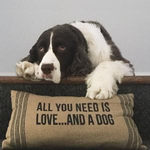All You Need Is Love ... And A Dog by K. Lowenkron