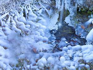 Germany, Ice on Small Waterfall, Hoarfrost on Stems, Autumn Leaves under Ice by K. Schlierbach