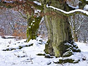 Germany, Kellerwald Nature Park, Winter by K. Schlierbach