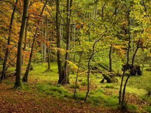 Germany, Ruegen Jasmund National Park, Hertha Lake by K. Schlierbach