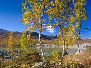 Norway, Autumn Fjellbirken at Mountain Lake in Grotli by K. Schlierbach