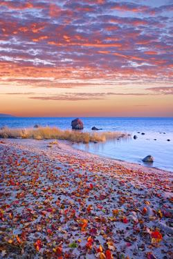 Sweden, Fall by the Hano Bay, Red Autumn Leaves on the Sandy Beach, Red Morning Sky, Baltic Beach by K. Schlierbach