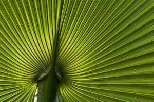 Tropical Fan Leaf, Underside by K. Schlierbach