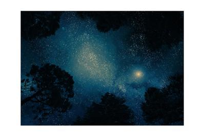 Starry Sky through Trees by kaalimies