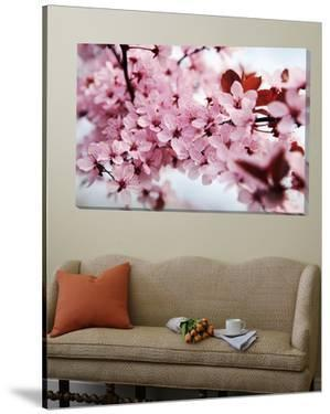 Japanese Cherry Blossom by Kai Schwabe