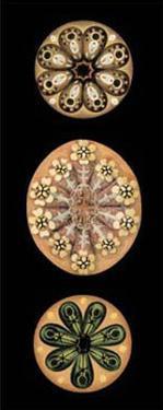 Kaleidoscope Anemone II