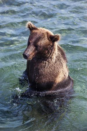 https://imgc.allpostersimages.com/img/posters/kamchatka-brown-bear-ursus-arctos-beringianus-kurile-lake-kamchatka-russia-eurasia_u-L-PQ8R4N0.jpg?p=0