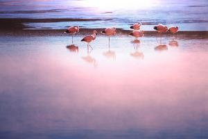 Flamingo by Kamchatka