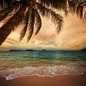 Tropical Beach by Kamchatka