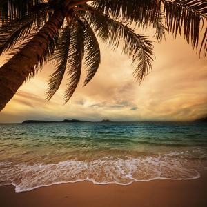 Tropical Beach by Kamchatka