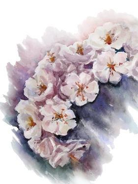 Watercolor Cherry Blossom. Flower Painting. Vector EPS 10. by Kamenuka