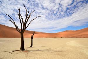 Deadvlei,Namib Desert,Namibia by Karel Gallas