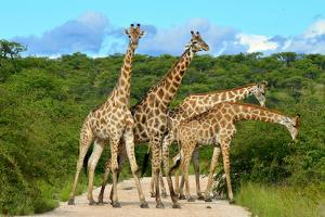 Giraffes Overcrowding,Namibia by Karel Gallas