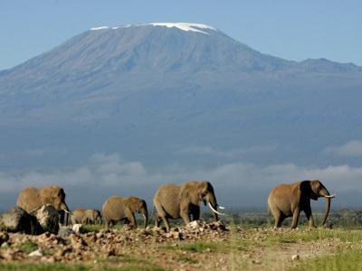Elephants Backdropped by Mt. Kilimanjaro, Amboseli, Kenya