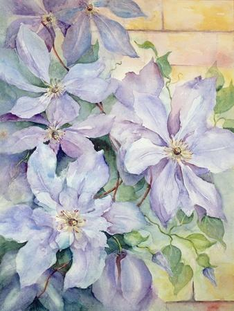 Clematis, the President