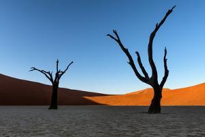 Deadvlei, Namibia, Africa by Karen Deakin