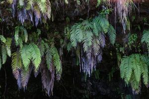 Ferns in Tahiti by Karen Kasmauski