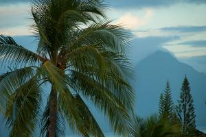 Palm Trees in Bora Bora by Karen Kasmauski