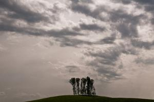 Silhouette of Trees Against Dramatic Sky, Morgan County, Tennessee by Karen Kasmauski