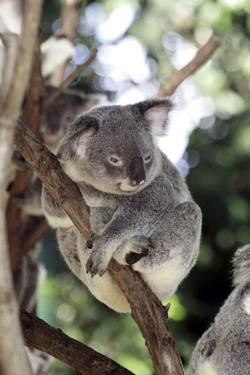 Australia 4 by Karen Williams