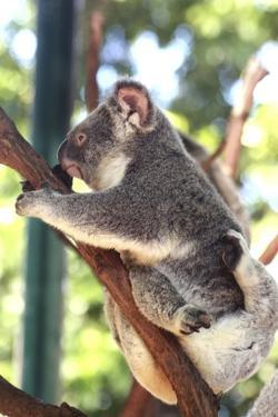 Australia 6 by Karen Williams