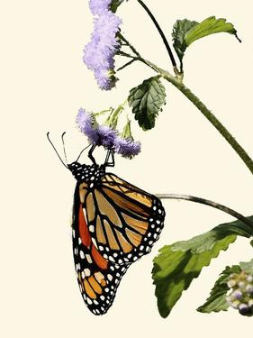 Butterfly by Karen Williams