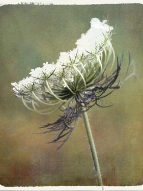 Wild Bloom by Karen Williams