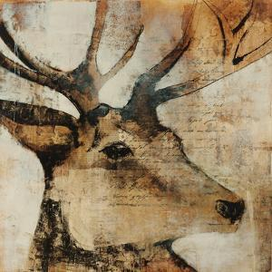 Young Stag by Kari Taylor