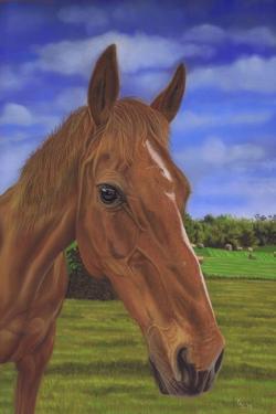 Field Horse by Karie-Ann Cooper